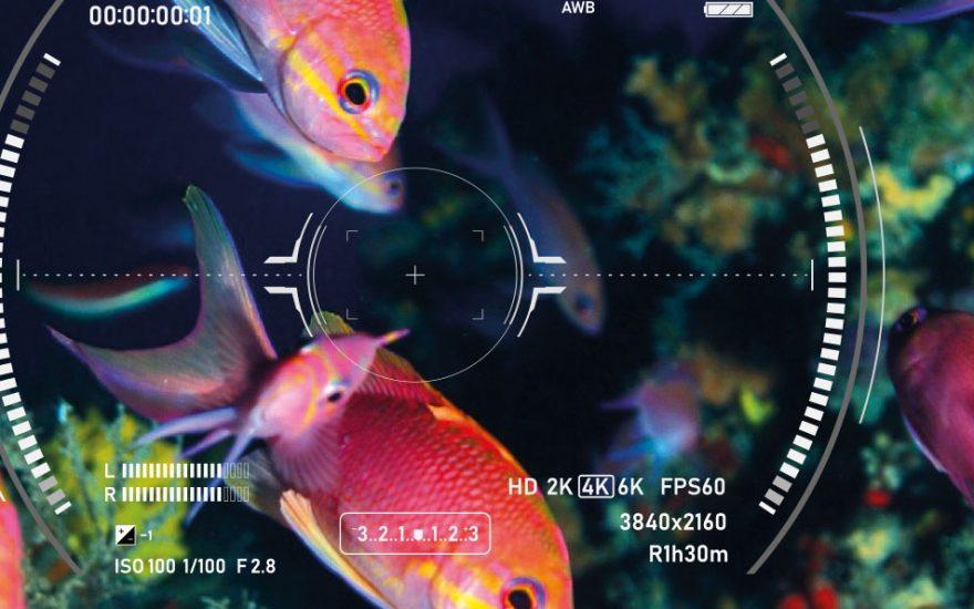 Concours photo – Objectif sous la mer
